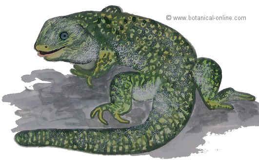 Dibujo de lagarto ocelado