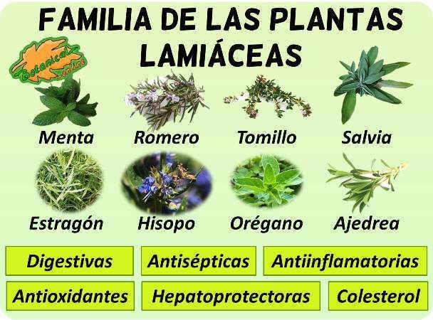 plantas umbeliferas propiedades beneficios anetol