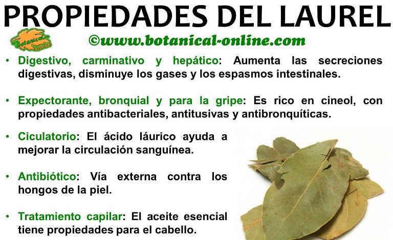 Laurel - Informacion sobre el eucalipto ...