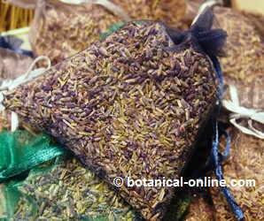 El cultivo de la lavanda for Lavanda cultivo o cuidados