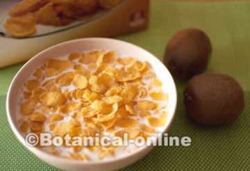 Tazón de cereales para el desayuno