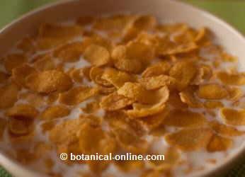 leche con cereales de desayuno de maiz elote crispis