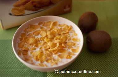 leche con cereales y kiwi