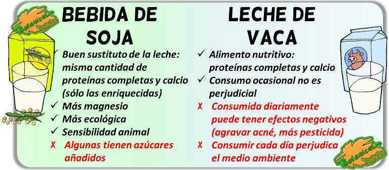 diferencias soja leche bebida vegetal