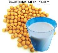 Leche de soja es rica en riboflavina o vitamina B2