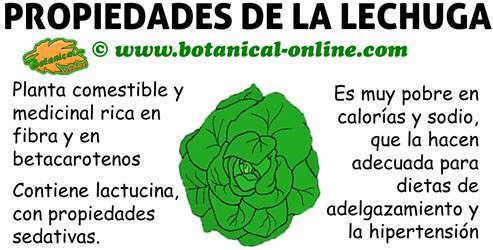 Valor Nutricional De La Lechuga Botanical Online