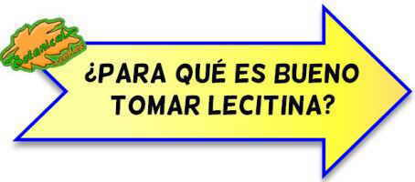 lecitina beneficios