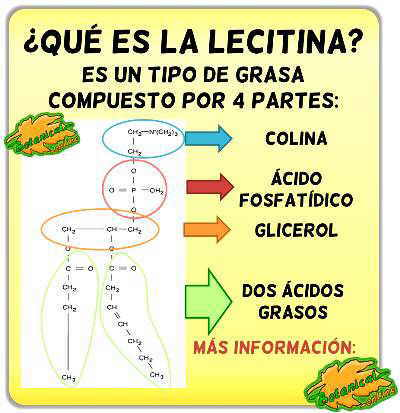 fosfatidilcolina lecitina estructura fosfolipido lecitina de soja
