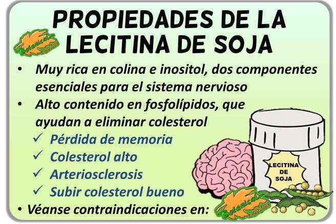 Propiedades medicinales y beneficios de la lecitina de soja