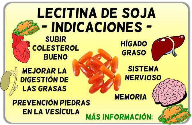 Propiedades medicinales y beneficios de la lecitina de soja indicaciones usos y beneficios
