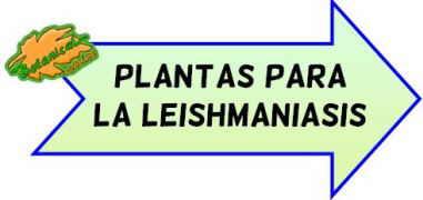 plantas para la leishmania