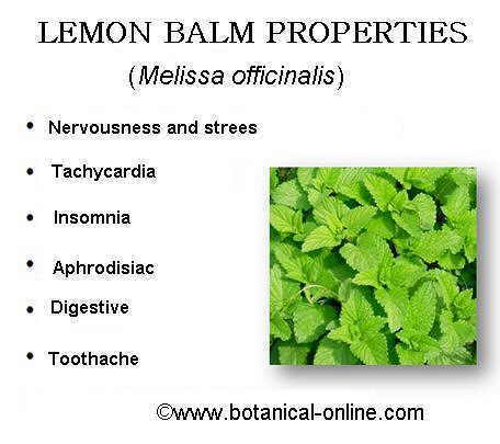 Melissa Officinalis Drawing Lemon Balm Properties