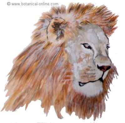 Dibujo cabeza de leon