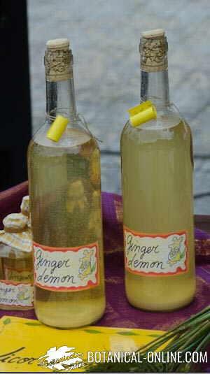 vino de tomillo tintura licor