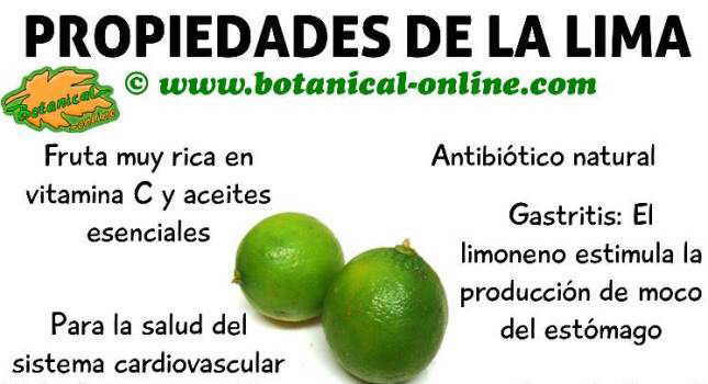 Lima, fruta