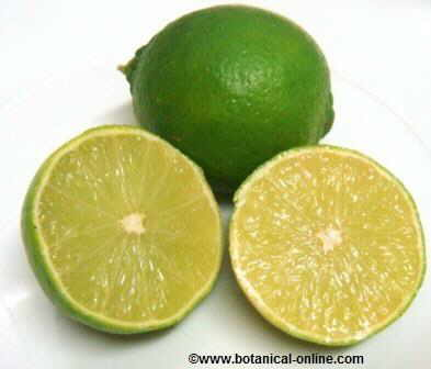 Lime,fruit