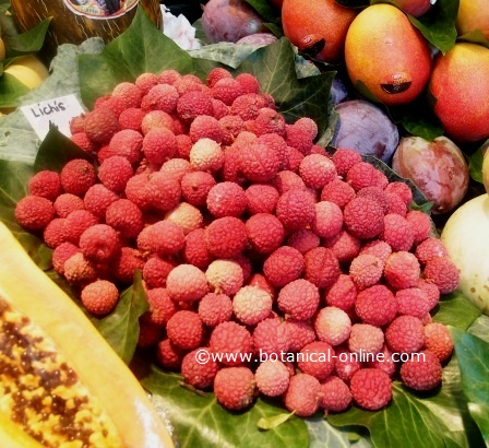 photograph of lychees