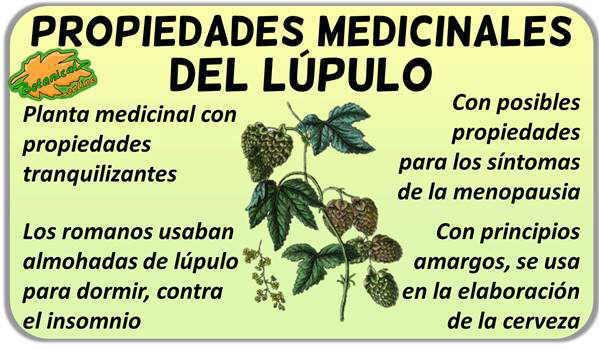 propiedades medicinales del lupulo
