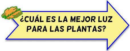 orientacion plantas de interior