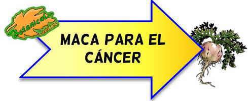 maca para el cancer