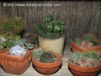 El cultivo de las suculentas for Plantas suculentas colgantes