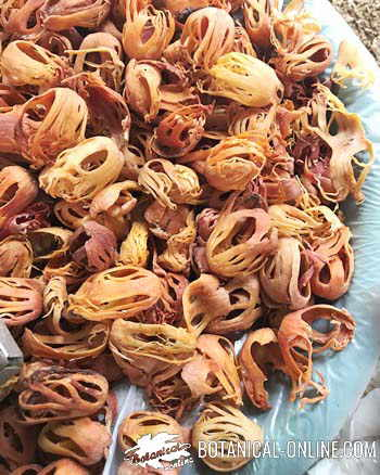 macis seco, especia procedente del arilo de la nuez moscada