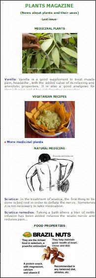 remedios curativos