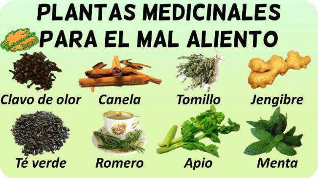 remedios caseros con plantas medicinales enjuagues y remedios para la halitosis mal aliento