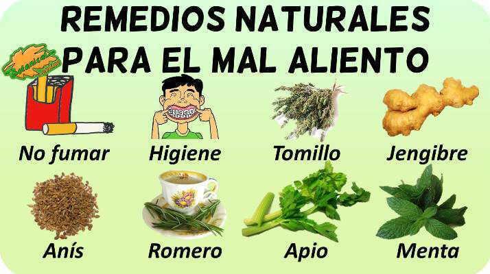 plantas medicinales enjuagues y remedios para la halitosis mal aliento