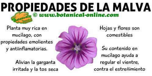 propiedades de la malva, planta medicinal