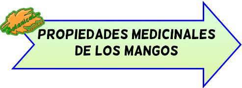 propiedades medicinales de los mangos
