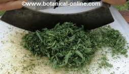 Triturar hierbas
