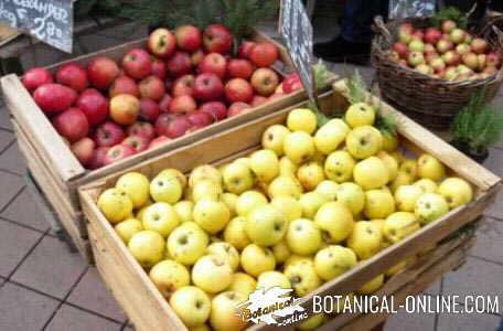 manzanas en mercado