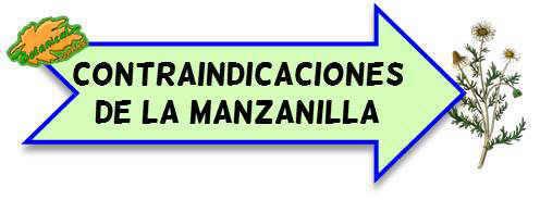 contraindicaciones de la manzanilla
