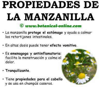 Propiedades medicinales y curativas de la manzanilla, beneficios matricaria chamomilla