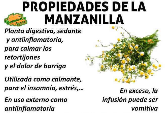 propiedades medicinales, curativas y beneficios de la manzanilla, matricaria chamomilla