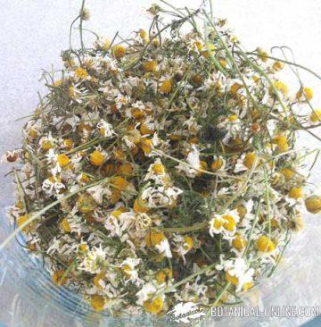manzanilla flores