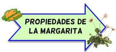 propiedades medicinales margarita