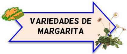 variedades de margaritas