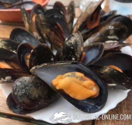 mejillones plato marisco