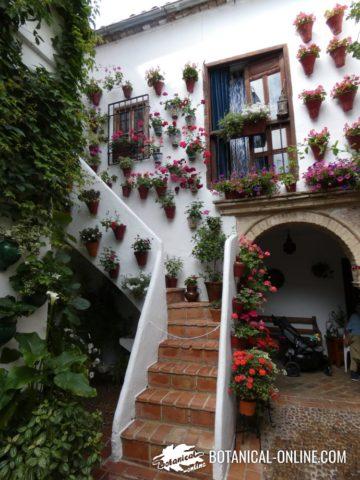 Escalera del patio de la casa Martinez Rucker 1