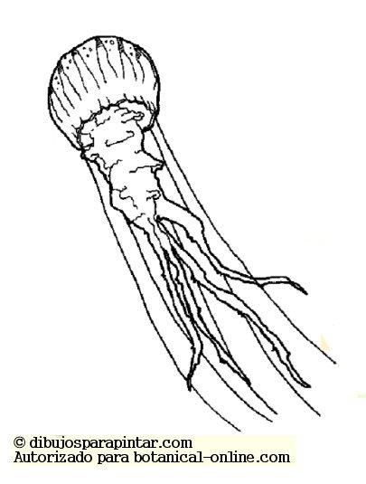 Anatomía de los vertebrados e invertebrados