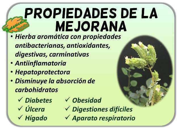 propiedades medicinales planta mejorana origanum majorana