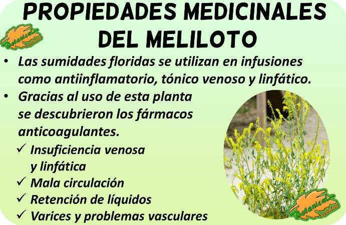 meliloto propiedades medicinales beneficios