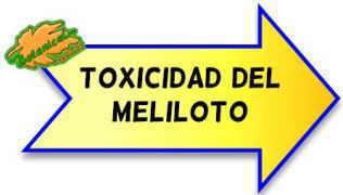 toxicidad del meliloto