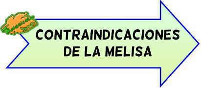 contraindicaciones de la melisa