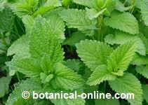 plantas medicinales para dejar de orinar