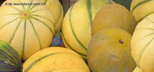 Foto de diferentes clases de melones