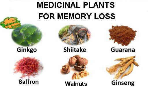 memomory loss plant remedies