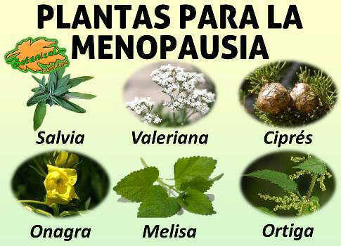Receta natural para la menopausia